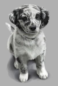 Mit der Tierhalter-Haftpflichtversicherung der VHV sind Sie bei jedem Spaziergang oder Ausritt mit Ihrem vierbeinigen Freund sicher unterwegs