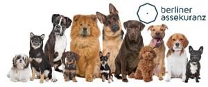 Tierhalterhaftpflicht Hund, Tierhalterhaftpflicht Preisvergleich, Hundeversicherung Preisvergleich, Hundehaftpflicht Versicherung, Versicherungsvergleich Tierhalterhaftpflicht, Tierhalterhaftpflicht, Hundehaftpflicht, Vergleich Hundehaftpflicht